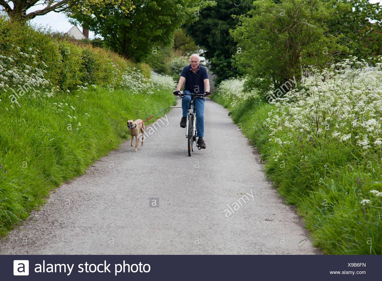 Senior man riding bike on country lane with dog - Stock Image