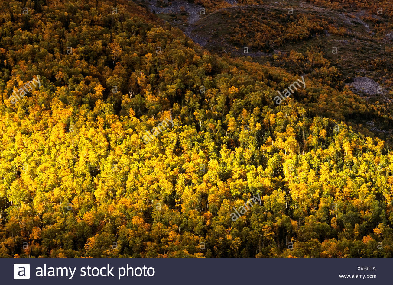 Forest in Fall, Gros Morne National Park, Newfoundland, Canada - Stock Image