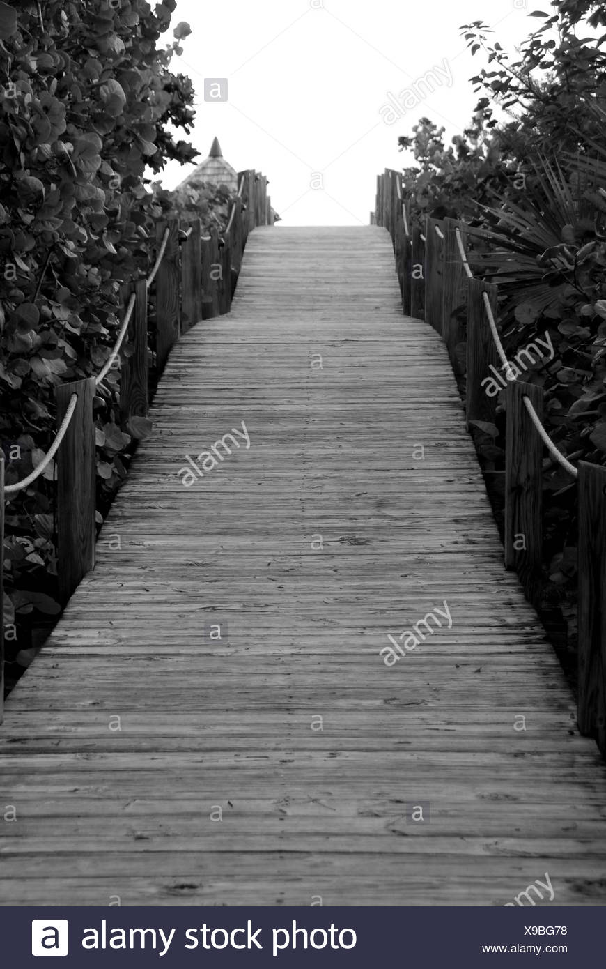 tree trees wood tropical increased elevated wooden paths caribbean turks tropic Stock Photo