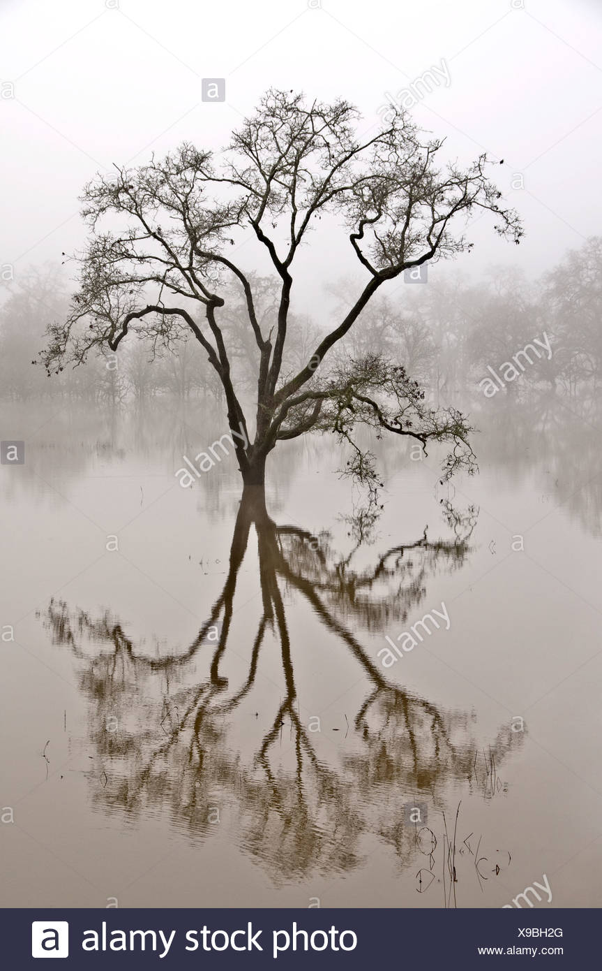 Tree and reflection in water - Stock Image