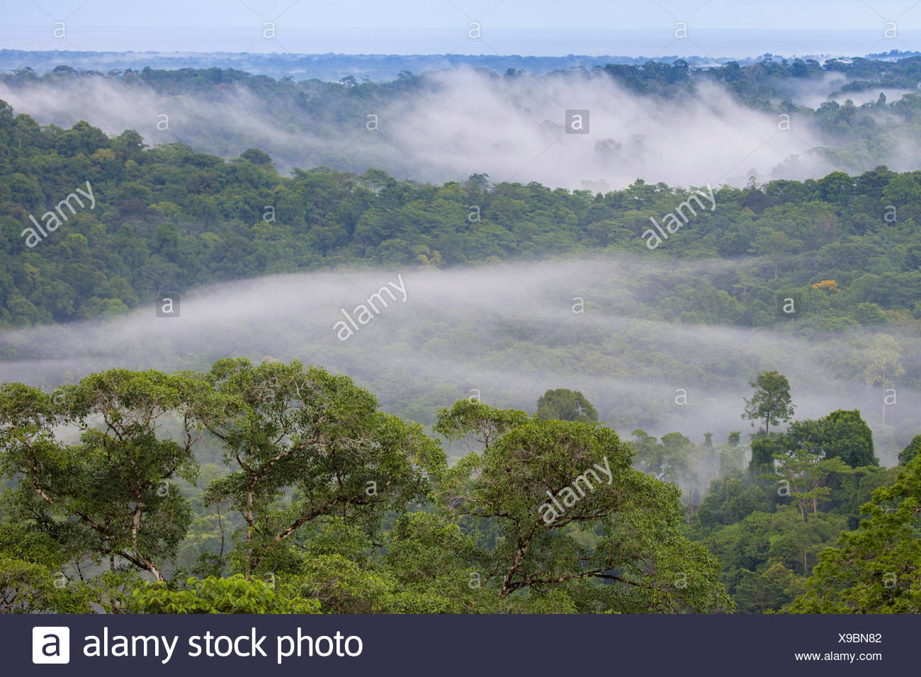 Lowland rainforest with hanging mist at dawn, Osa Peninsula, Costa Rica. - Stock Image