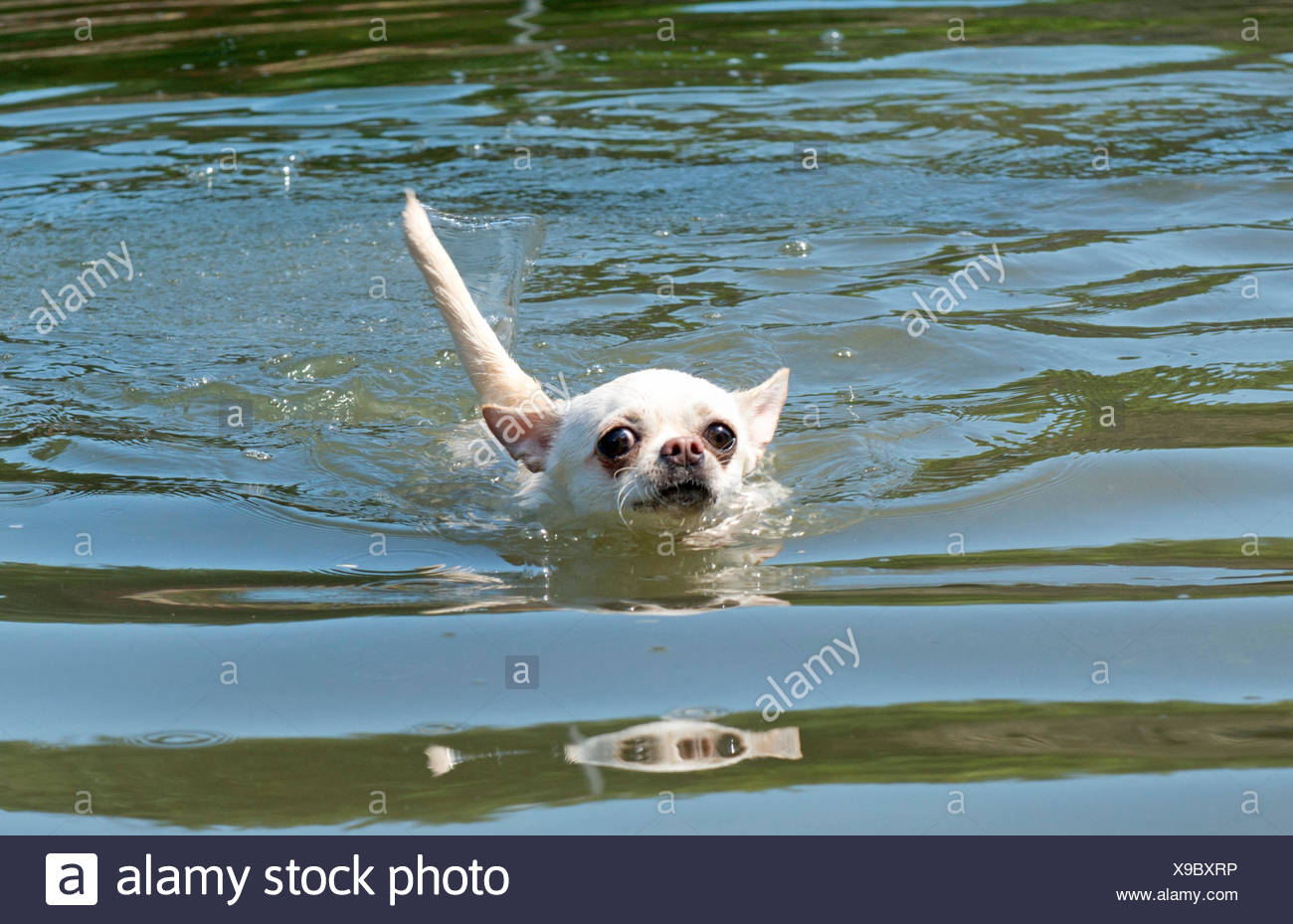 holiday, vacation, holidays, vacations, dog, puppy, salt water, sea, ocean, Stock Photo