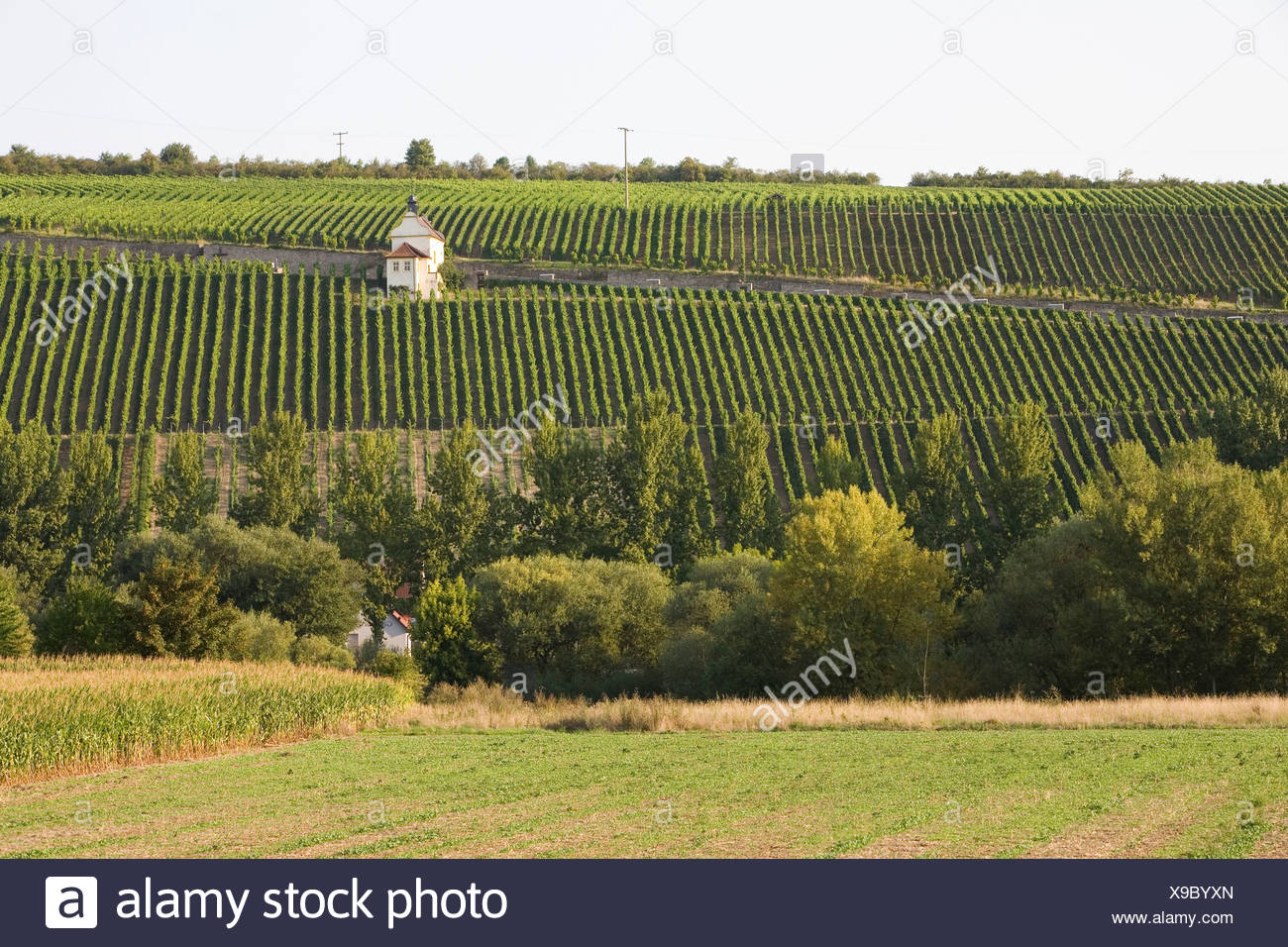 Germany, Bavaria, Michelau im Steigerwald, vineyard on steep hill - Stock Image