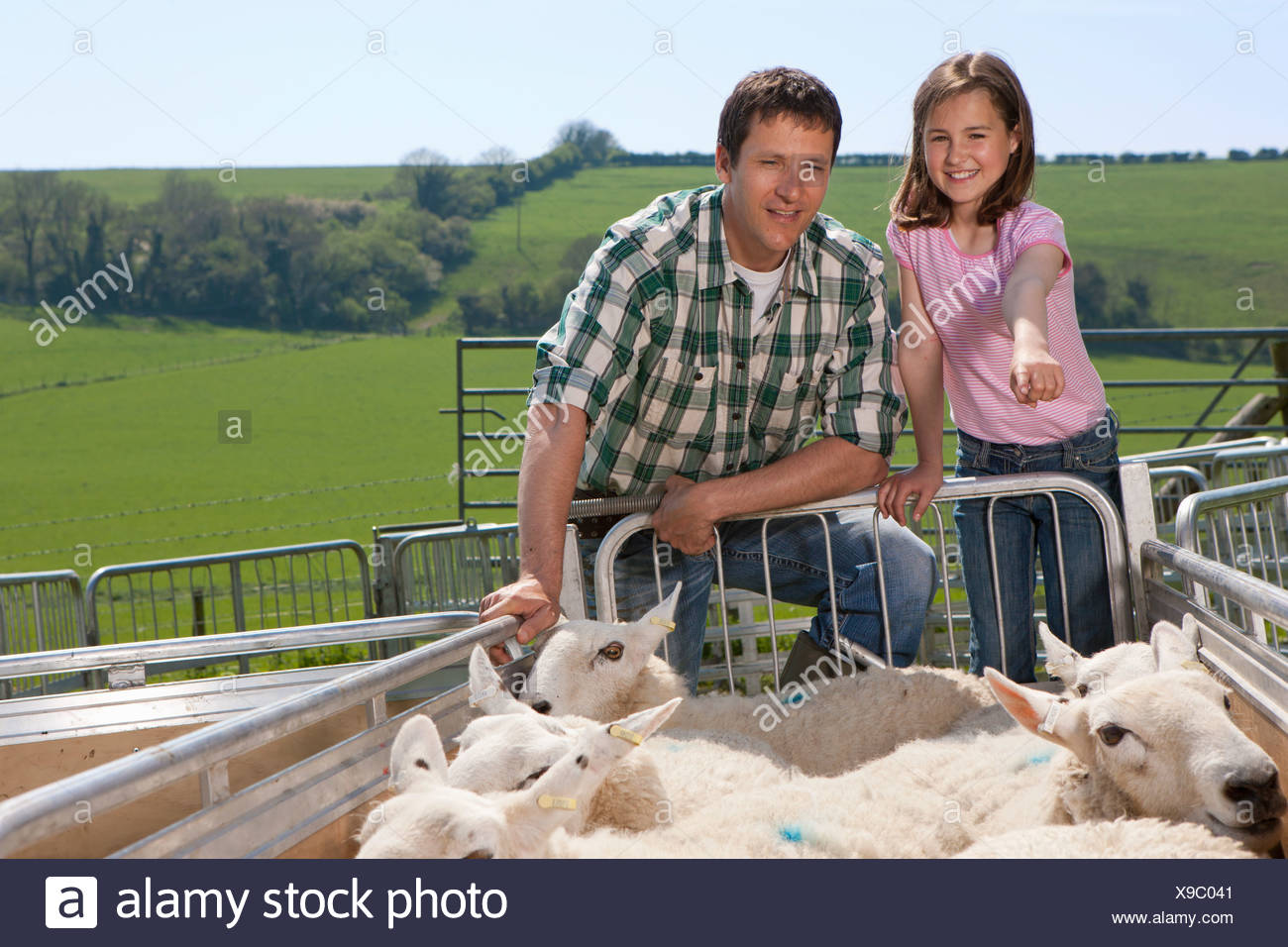 Shepherd and daughter counting sheep in gated pasture - Stock Image