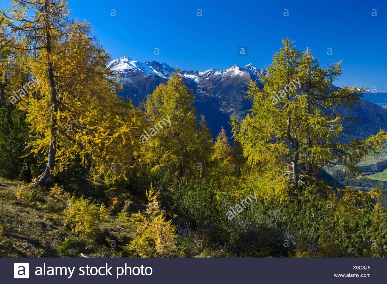 Austria, Tyrol, Mieminger plateau, Obsteig, Simmering, - Stock Image