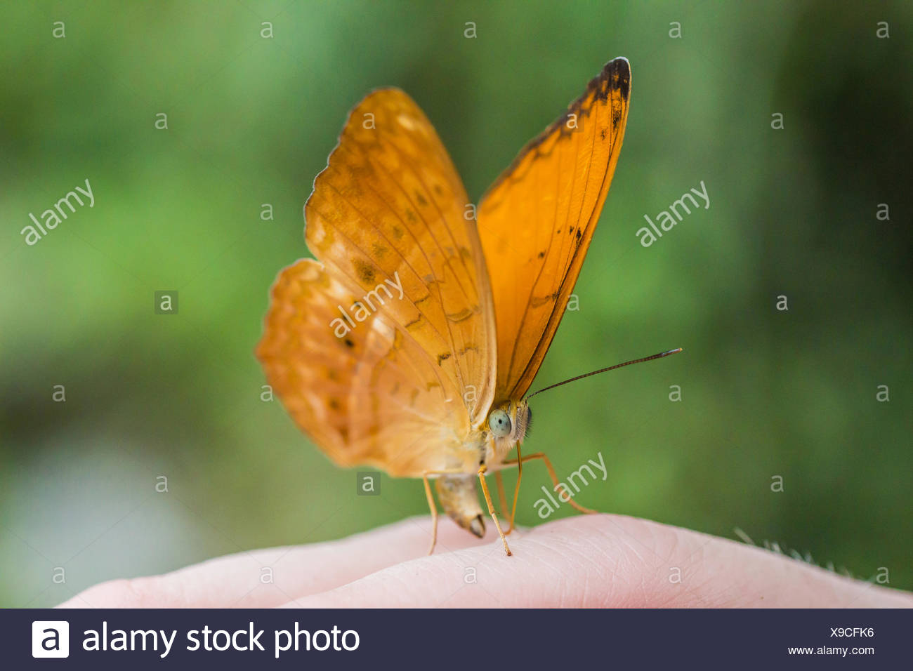 Butterfly on a hand - Stock Image