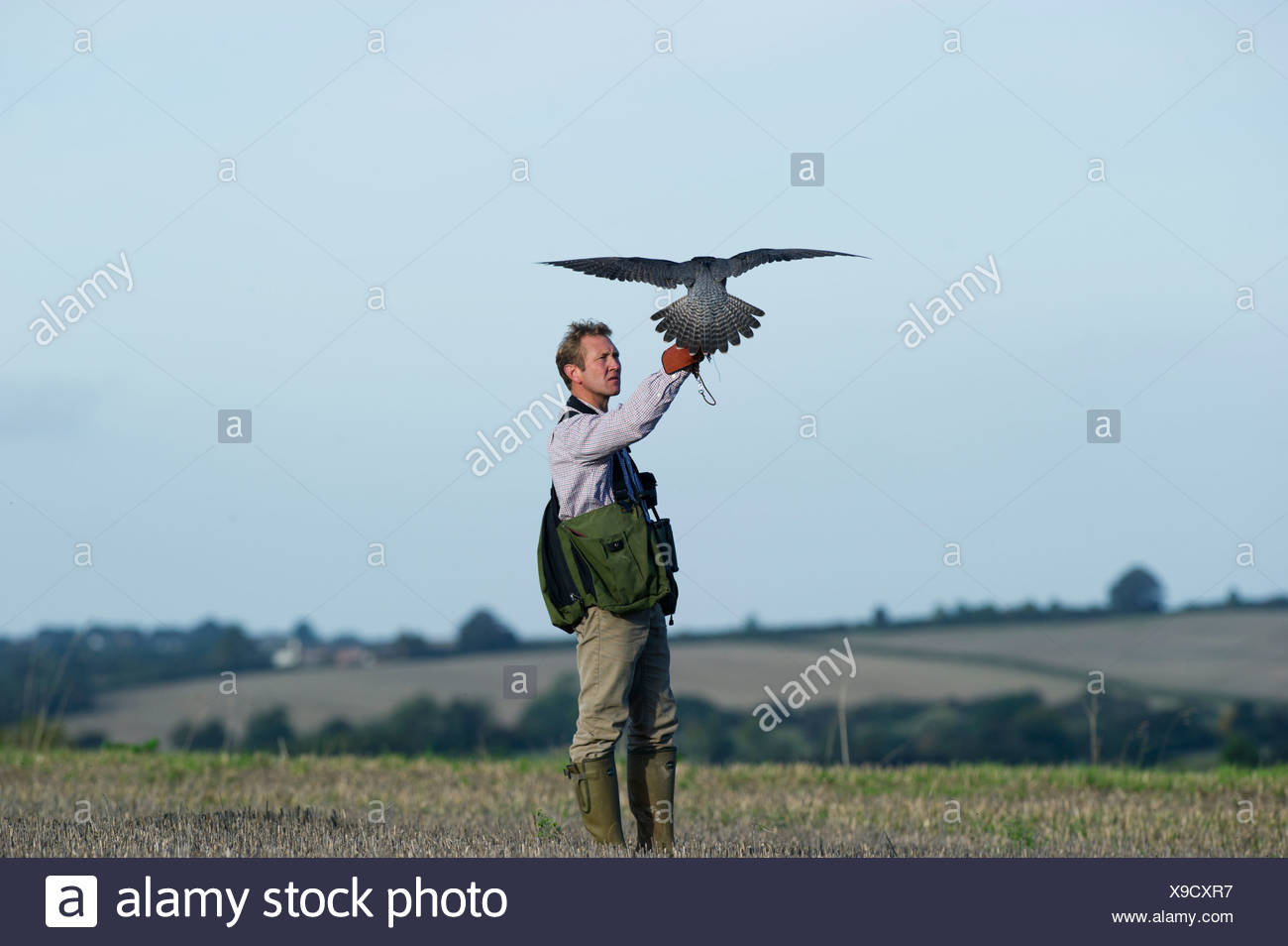 Falconer andy Hollidge with Peregrine Falcon at British Falconers Club International meet Lincolnshire 2010 - Stock Image