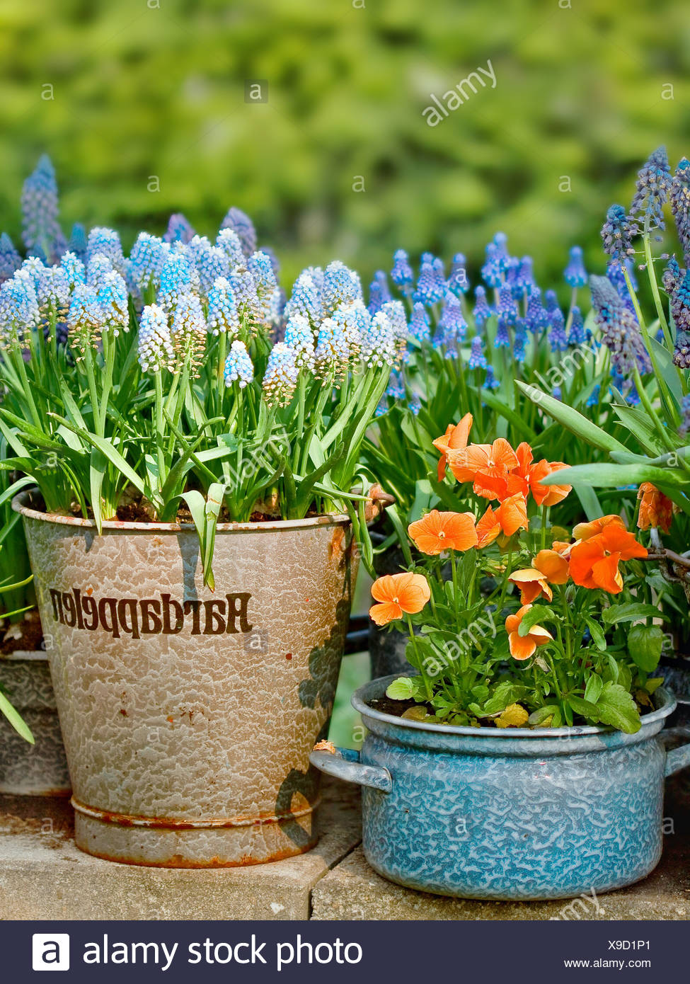 Plant Pots Bloom Garden Stock Photos Plant Pots Bloom Garden Stock