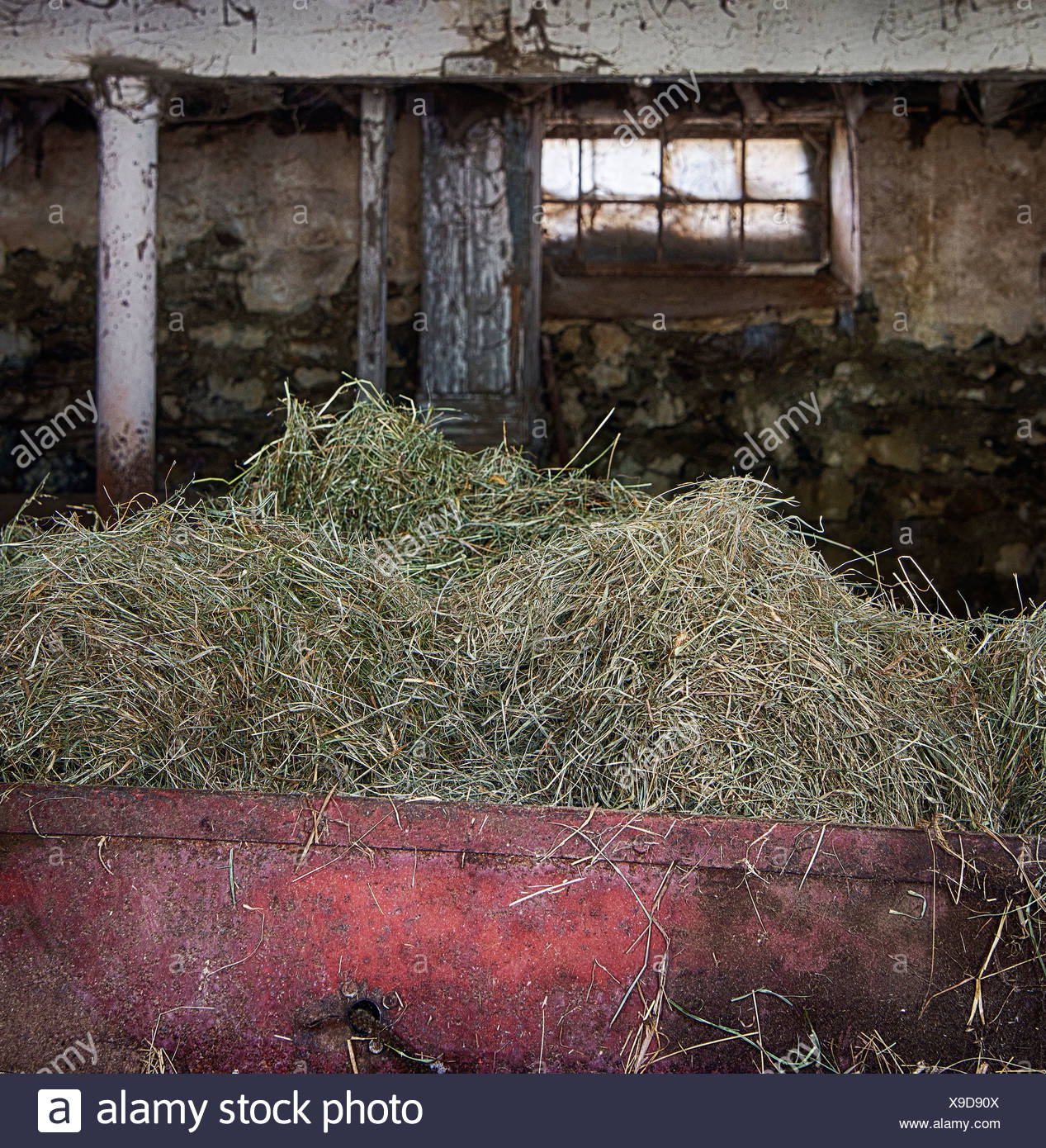 Hay in a barn bin to feed livestock - Stock Image