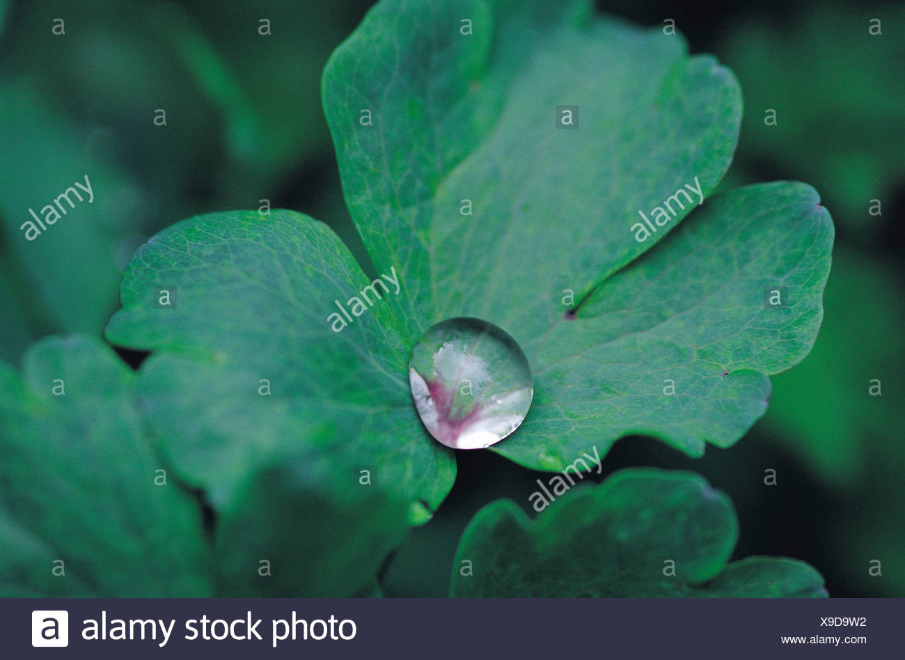 Dew drops - Stock Image