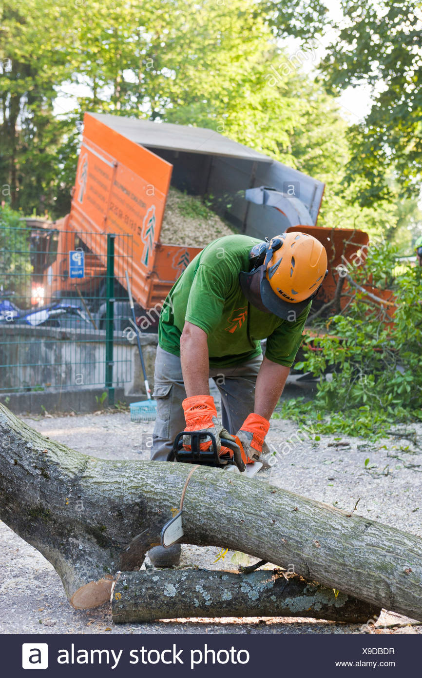 Lumberjack chopping up a tree bit by bit with a chainsaw, Germany, Europe - Stock Image