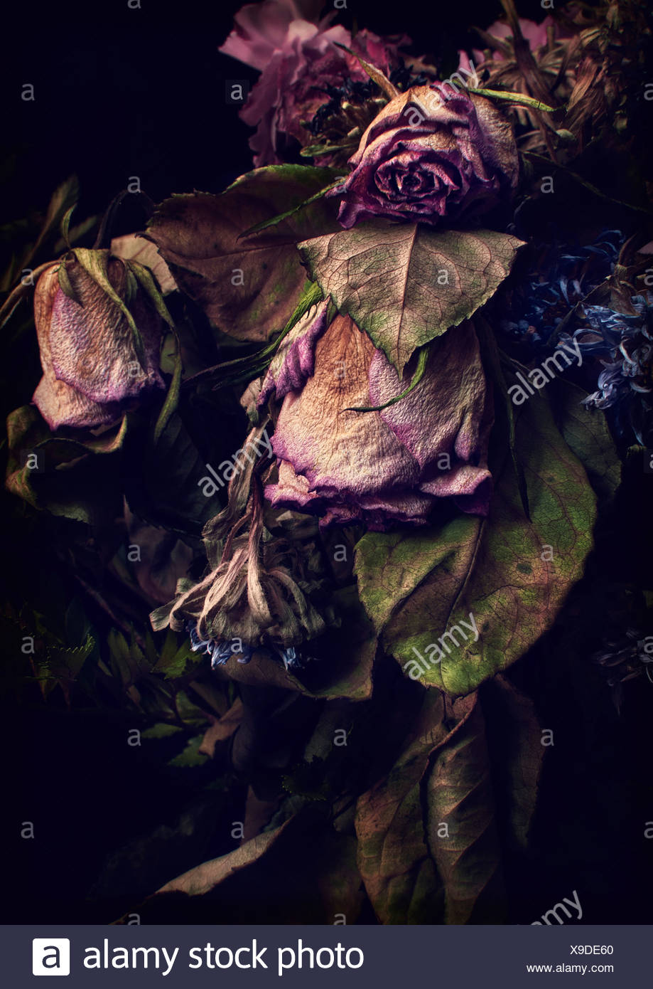 Close up of decaying flowers - Stock Image
