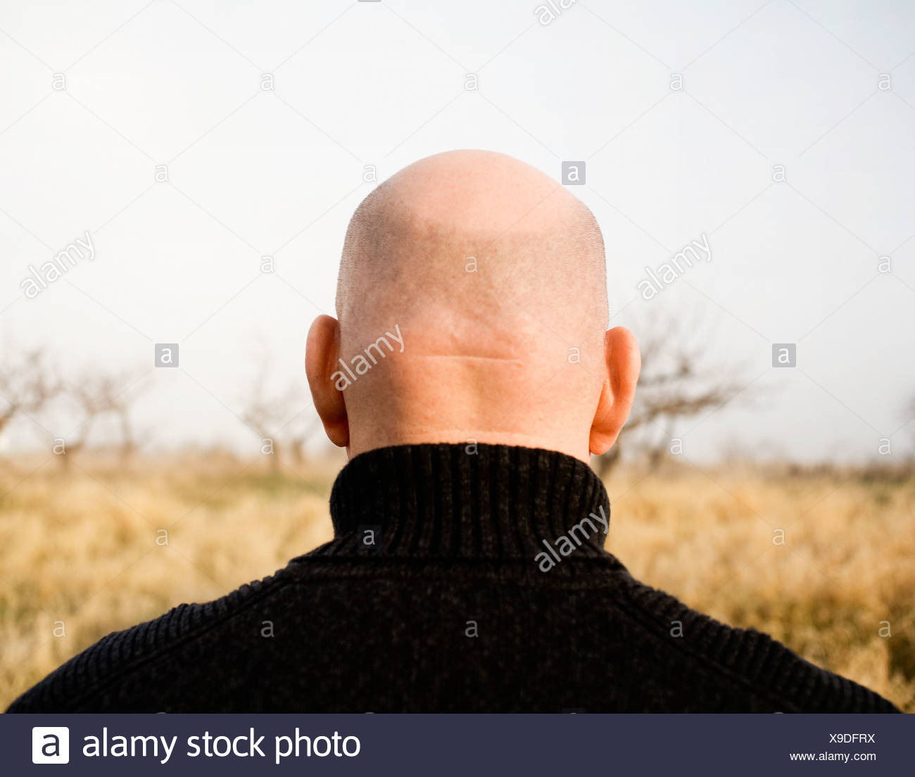 Close-up of a bald head, Sweden. - Stock Image
