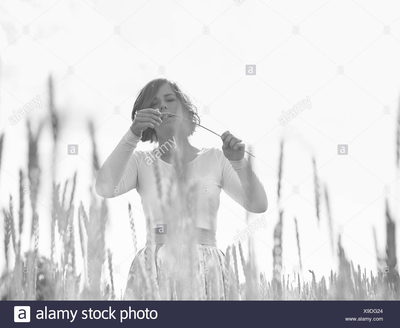 Young woman on wheat field - Stock Image