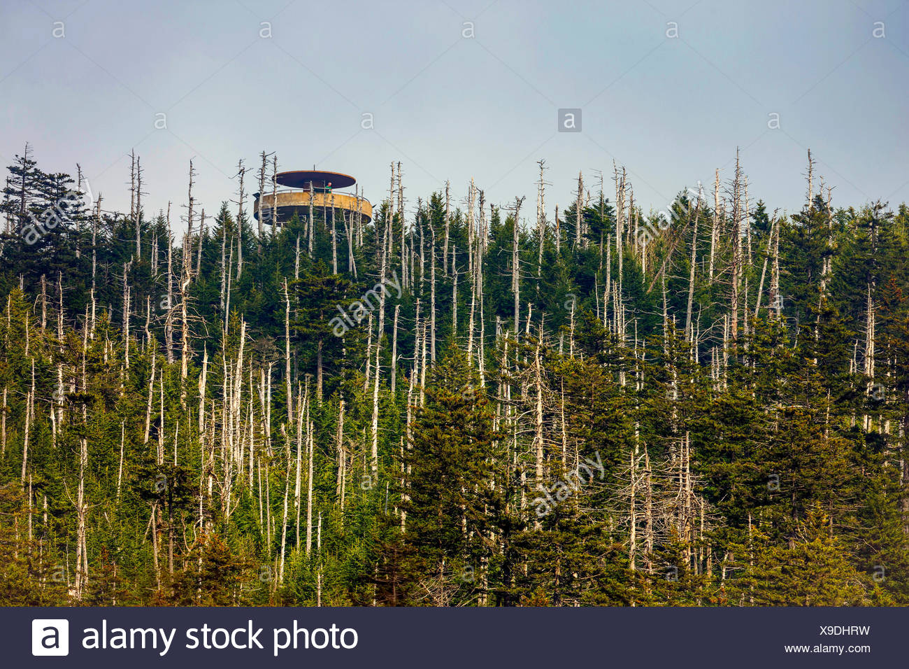 lookout tower in a conifer forest with coniferous forest, USA, Tennessee, Great Smoky Mountains National Park - Stock Image