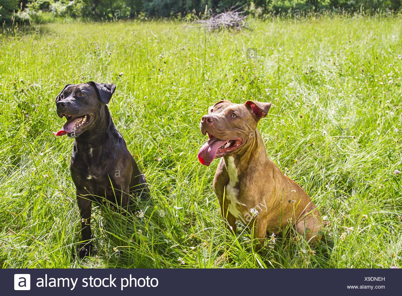 Dog days of summer - Stock Image