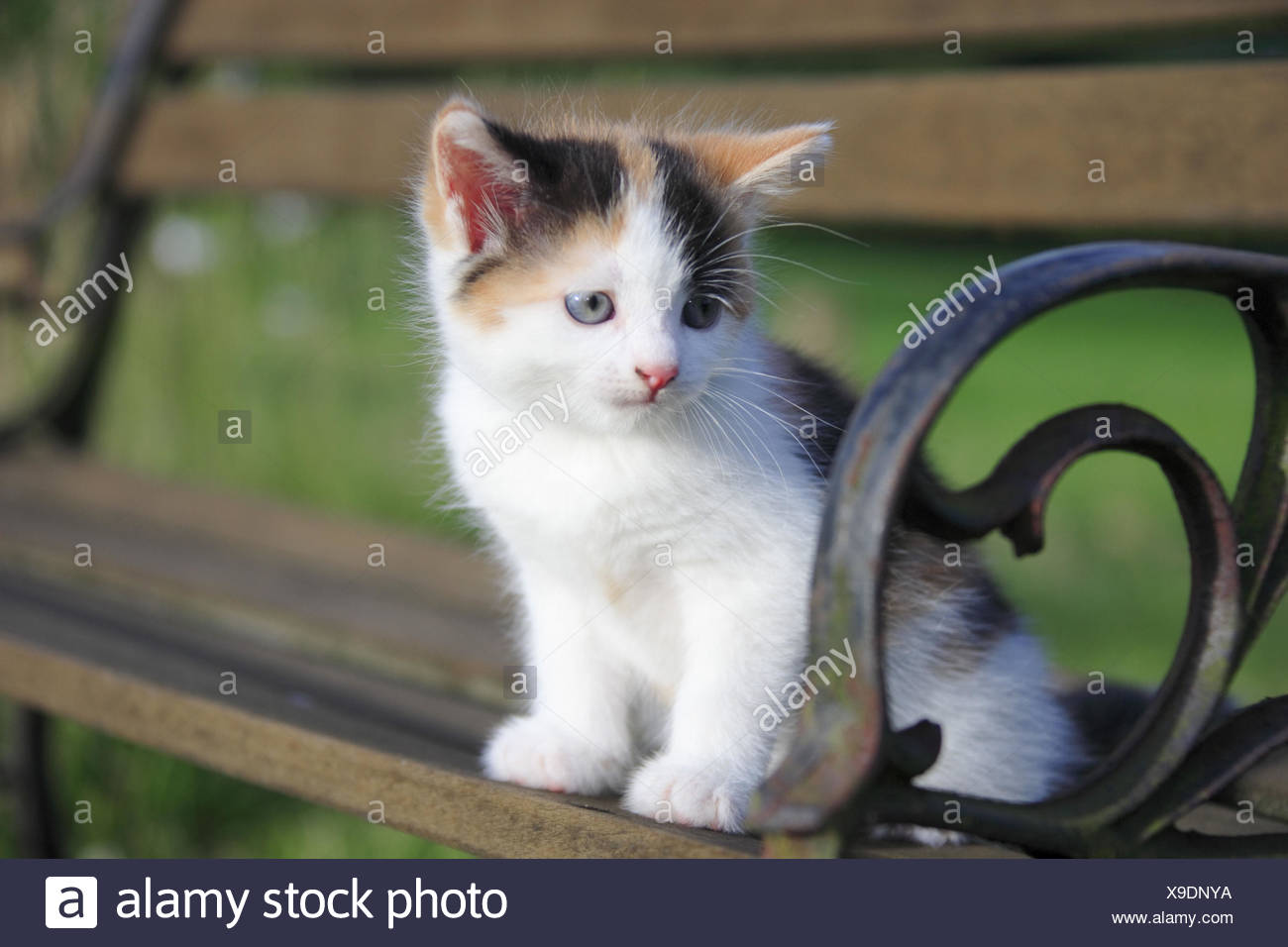 Magnificent House Cat Young Animal Garden Bench Sit Stock Photo Inzonedesignstudio Interior Chair Design Inzonedesignstudiocom