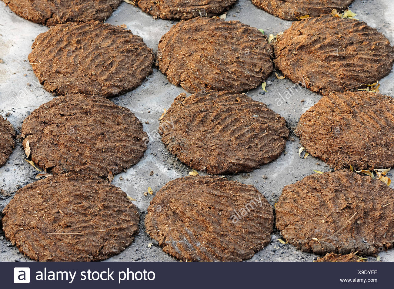 Cow dung laid out to dry for use as fuel, Bharatpur, Rajasthan, India - Stock Image