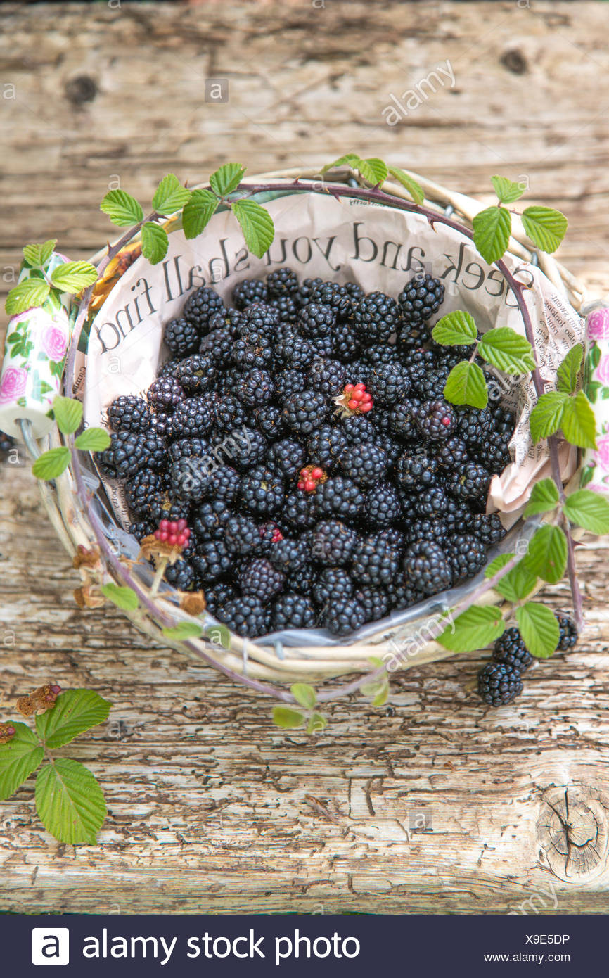 seek  and you shall find, blackberries in paper lined basket against rustic wood Stock Photo