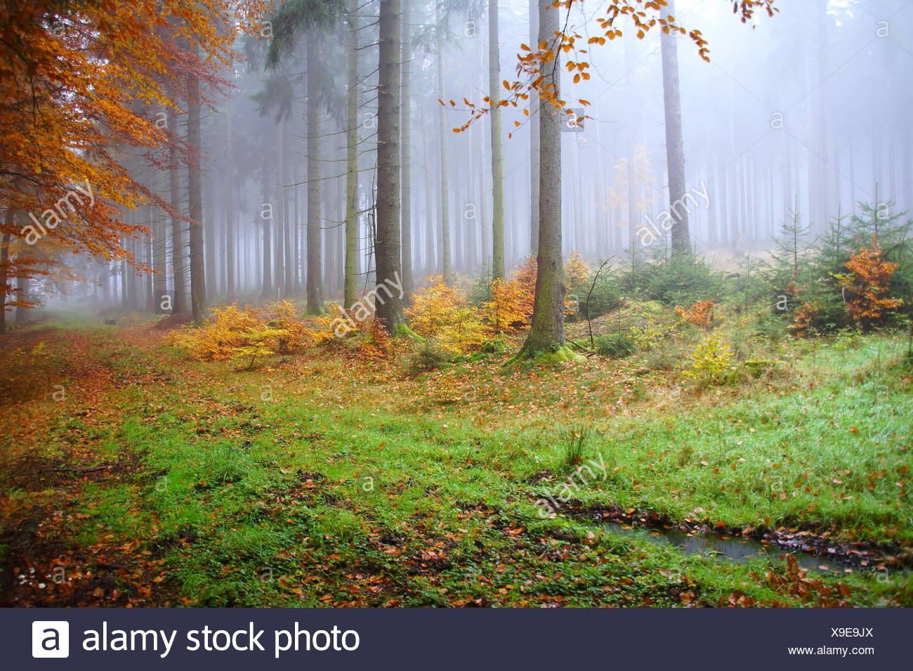 forest,mystical - Stock Image