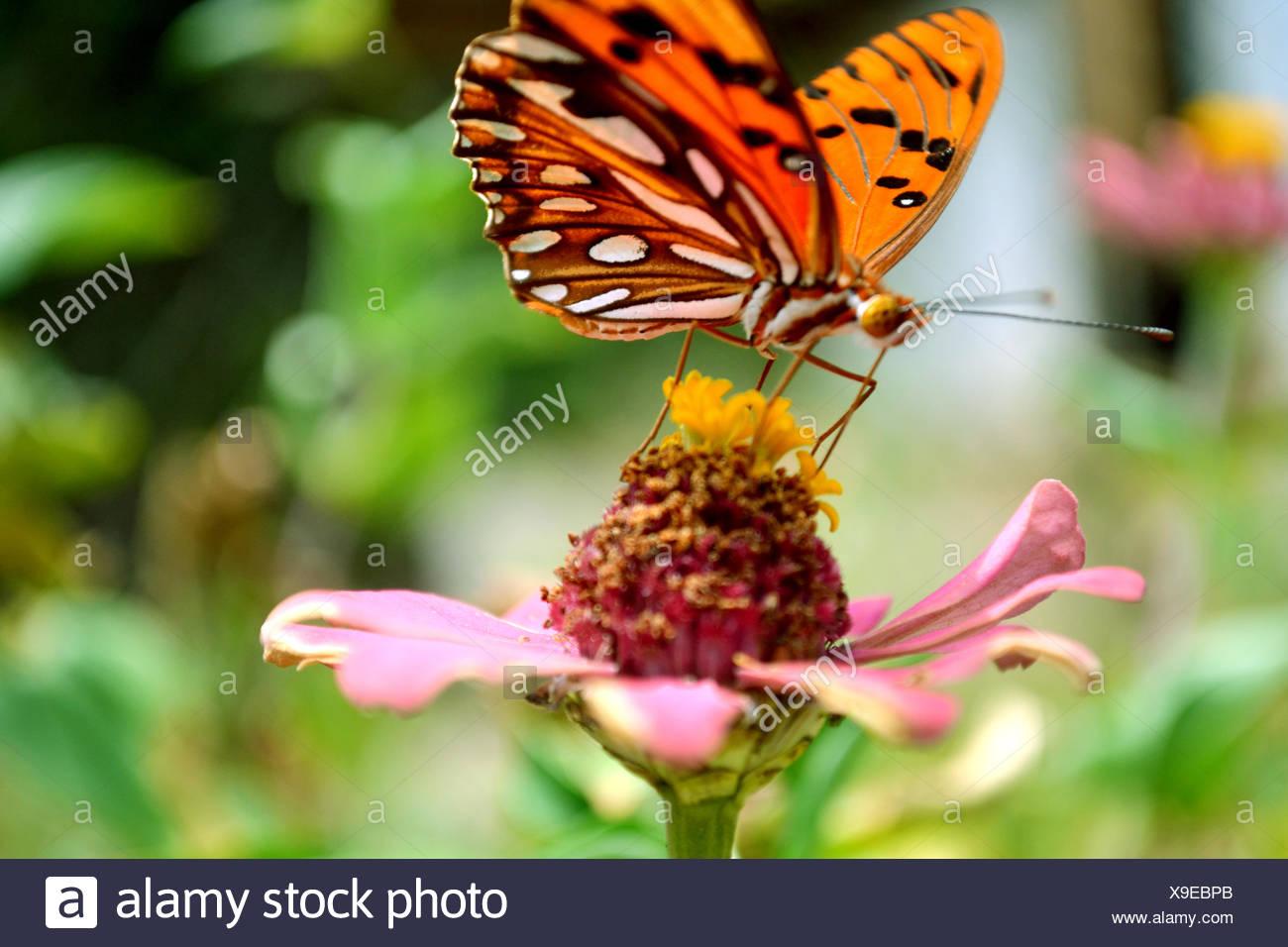 Butterfly On Flowerhead - Stock Image