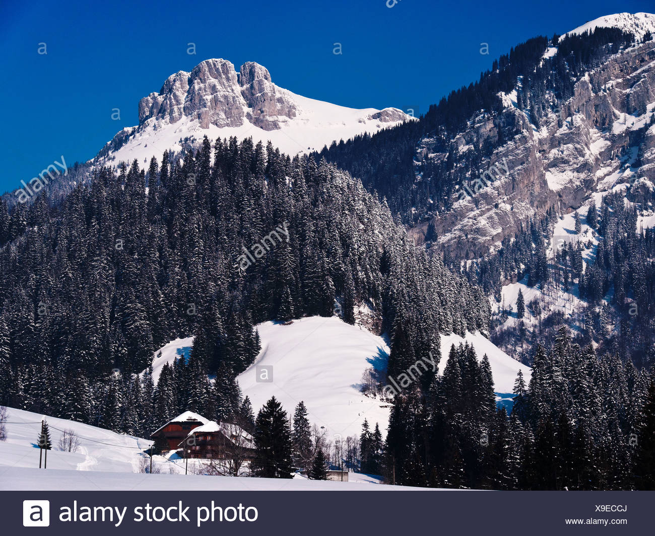 Mountain forest, Böli, Chüblisbüel, Emmental, spruce forest, house, home, court, yard, canton Bern, Kemmeriboden, scenery, natur - Stock Image