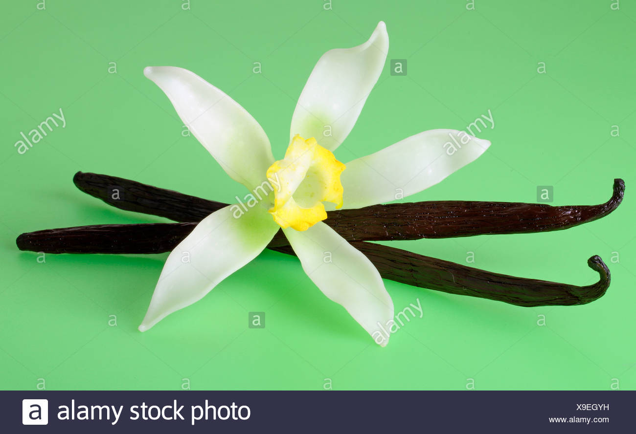 VANILLA FLOWERS AND PODS - Stock Image