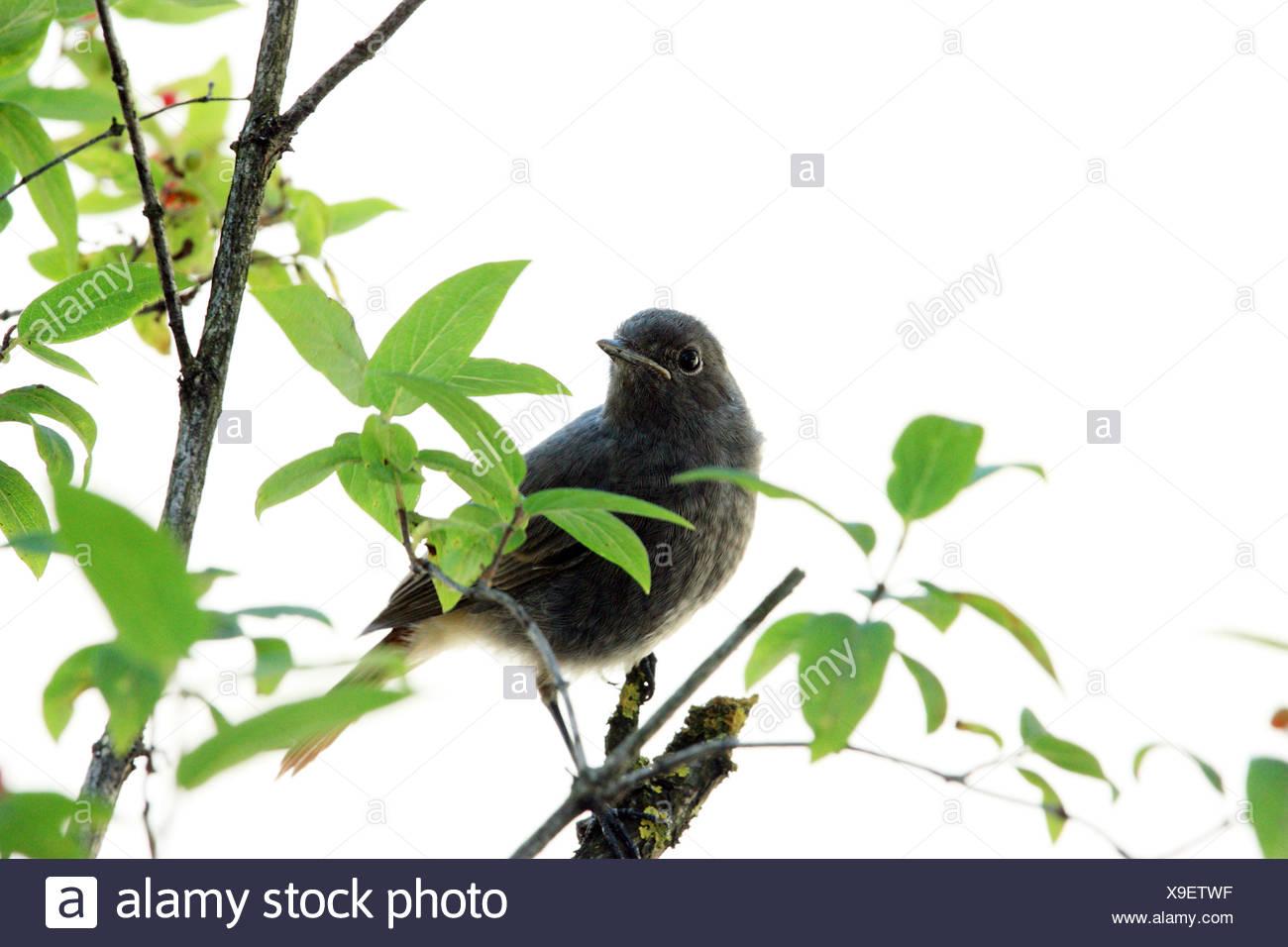 bird birds wing - Stock Image