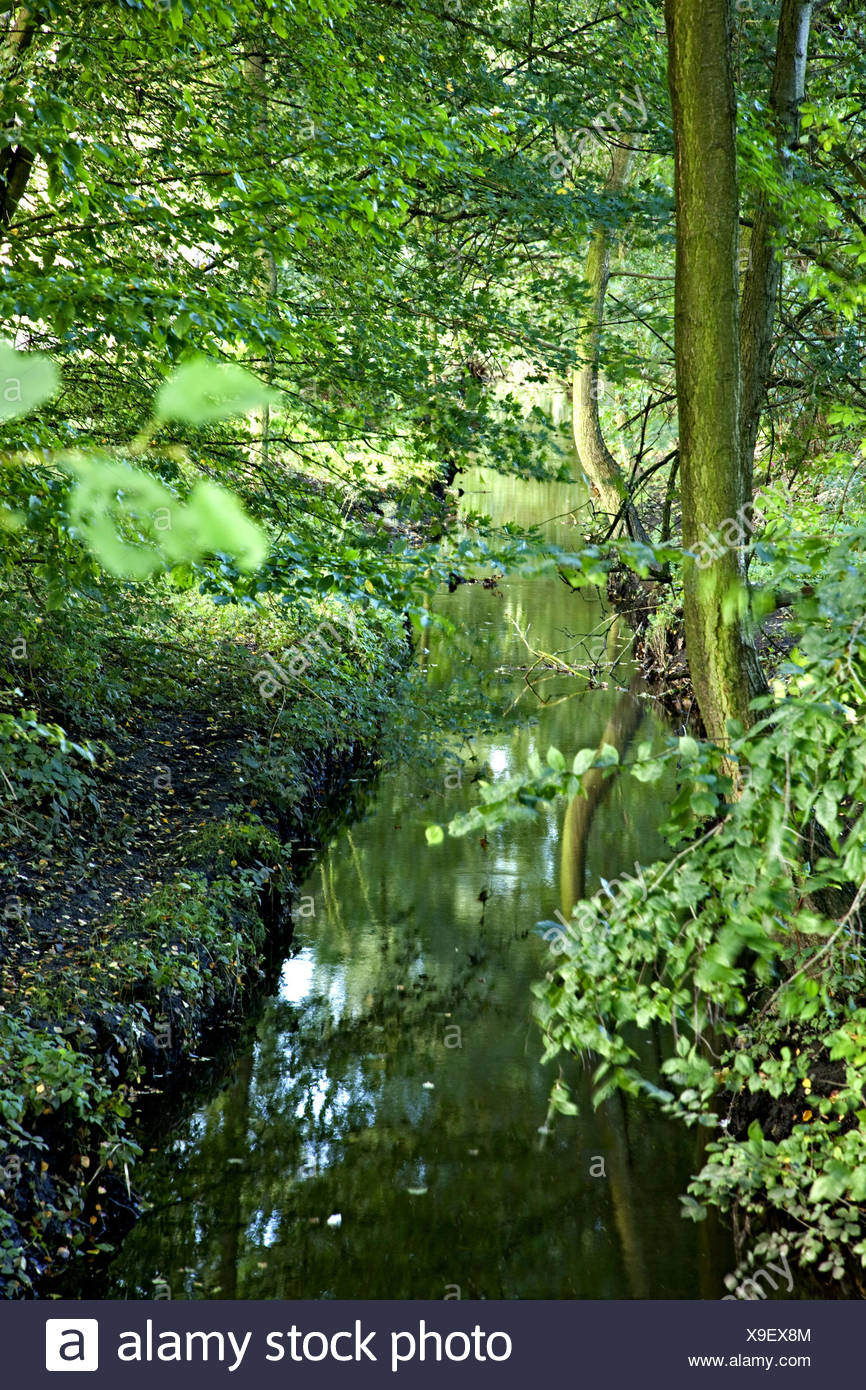 Brook, thicket, reflection, plants, nature, trees, foliage, leaves, waters, lush, green, outdoors, Hamburg, Germany, Stock Photo