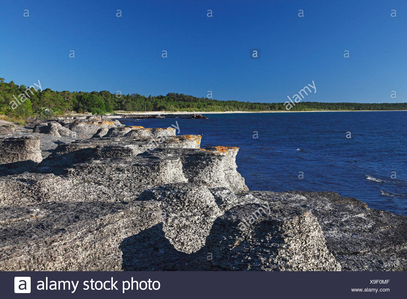 Kalksteinsaeulen an der Kueste bei Byrums Raukar, Schweden, Oeland, Byrums Raukar | chalkstone pillars at the coast at Byrums Ra - Stock Image