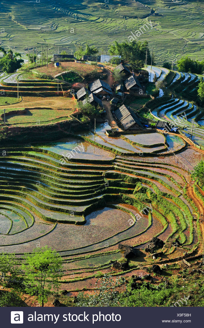 Houses, rice farmers, green rice terraces, rice paddies in Sapa or Sa Pa, Lao Cai province, northern Vietnam, Vietnam Stock Photo