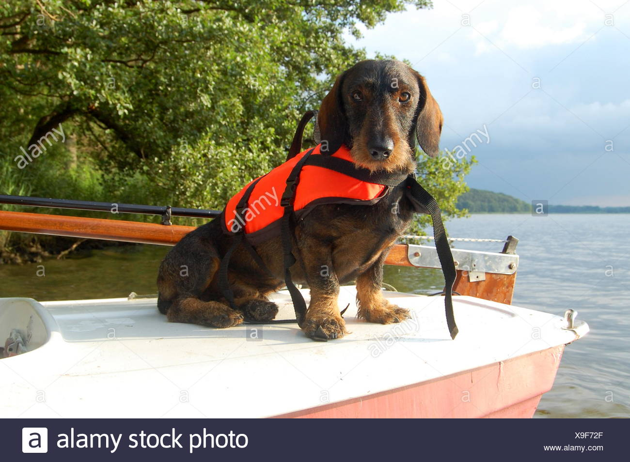 Lifejacket Stock Photos Amp Lifejacket Stock Images Alamy