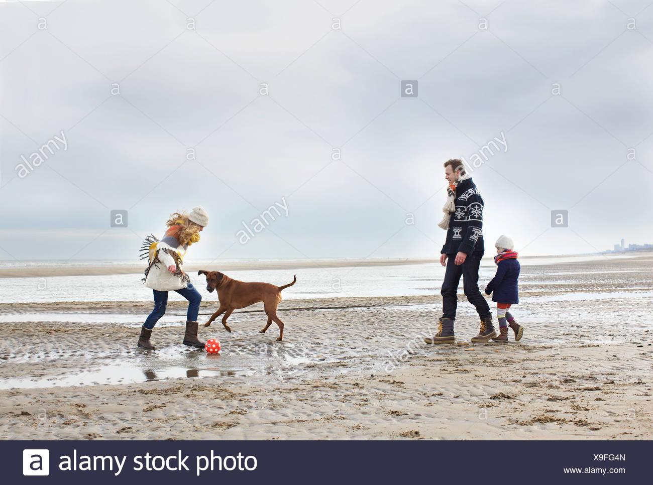 Mid adult parents with daughter and dog playing football on beach, Bloemendaal aan Zee, Netherlands - Stock Image