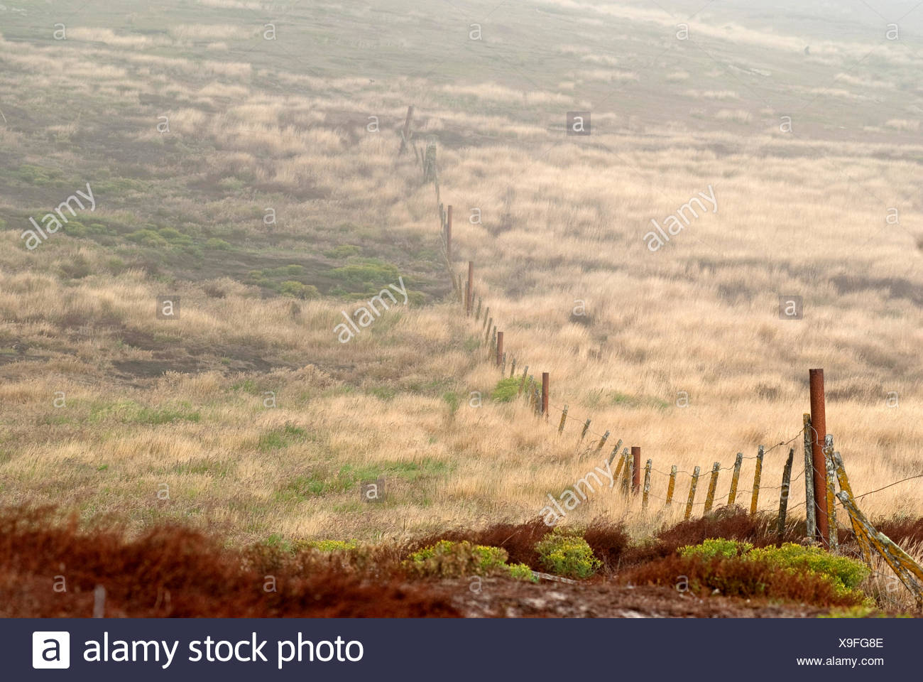 A fence separates sheep pastures. - Stock Image