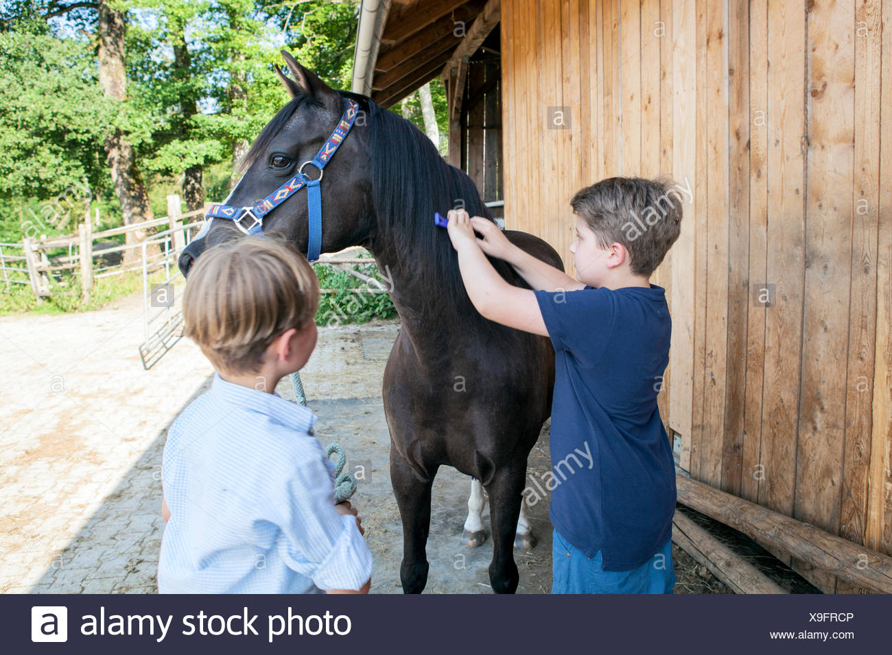Two boys grooming horse together - Stock Image