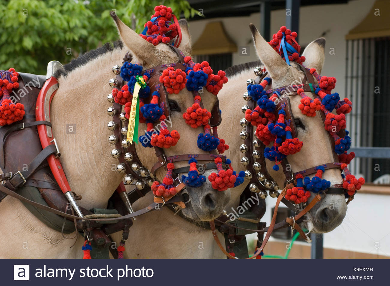 Horses decorated for a Pentecost pilgrimage in El Rocio, Andalusia, Spain, Europe - Stock Image