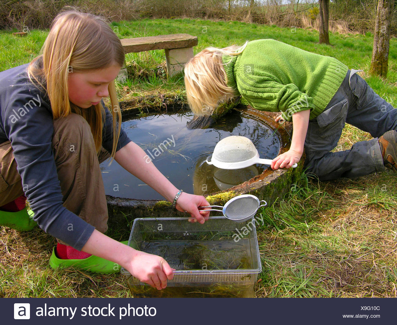 children catching water animals with cullenders in a garden pond, Germany Stock Photo