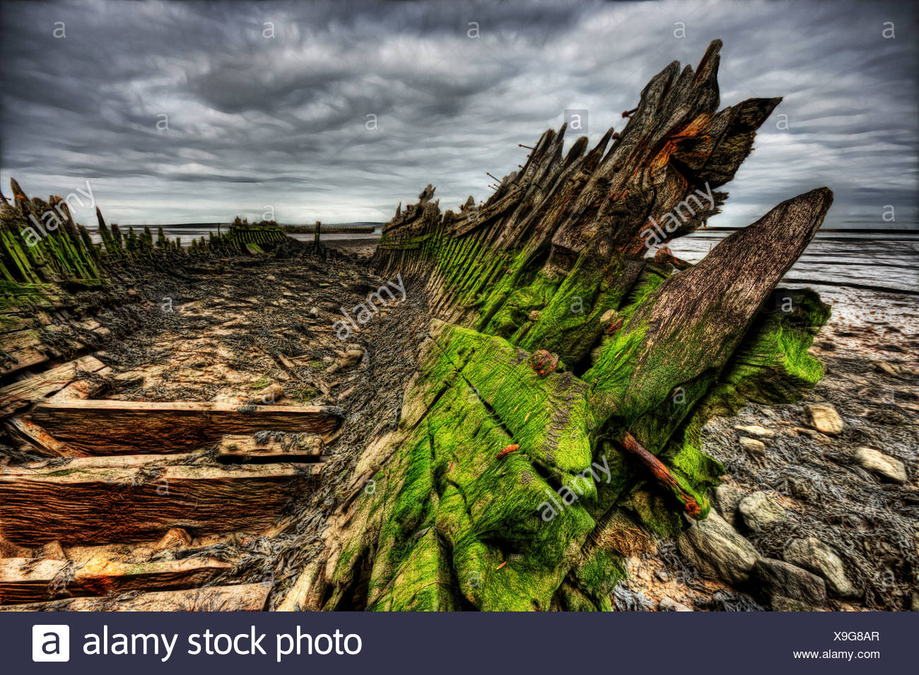 Green algea build up and rotting wood and nails on an old abandoned boat wreck beached in mud on the river swale - Stock Image