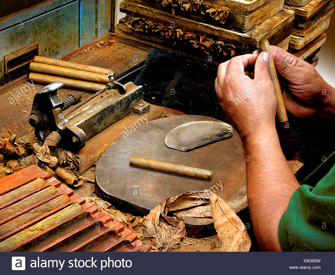A cigar maker rolling handmade cigars Stock Photo: 281256245