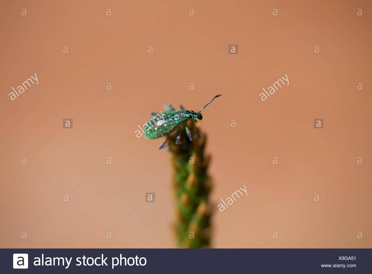 insect, branch, antenna, maddening, pert, coquettish, cute, rainforest, rain - Stock Image