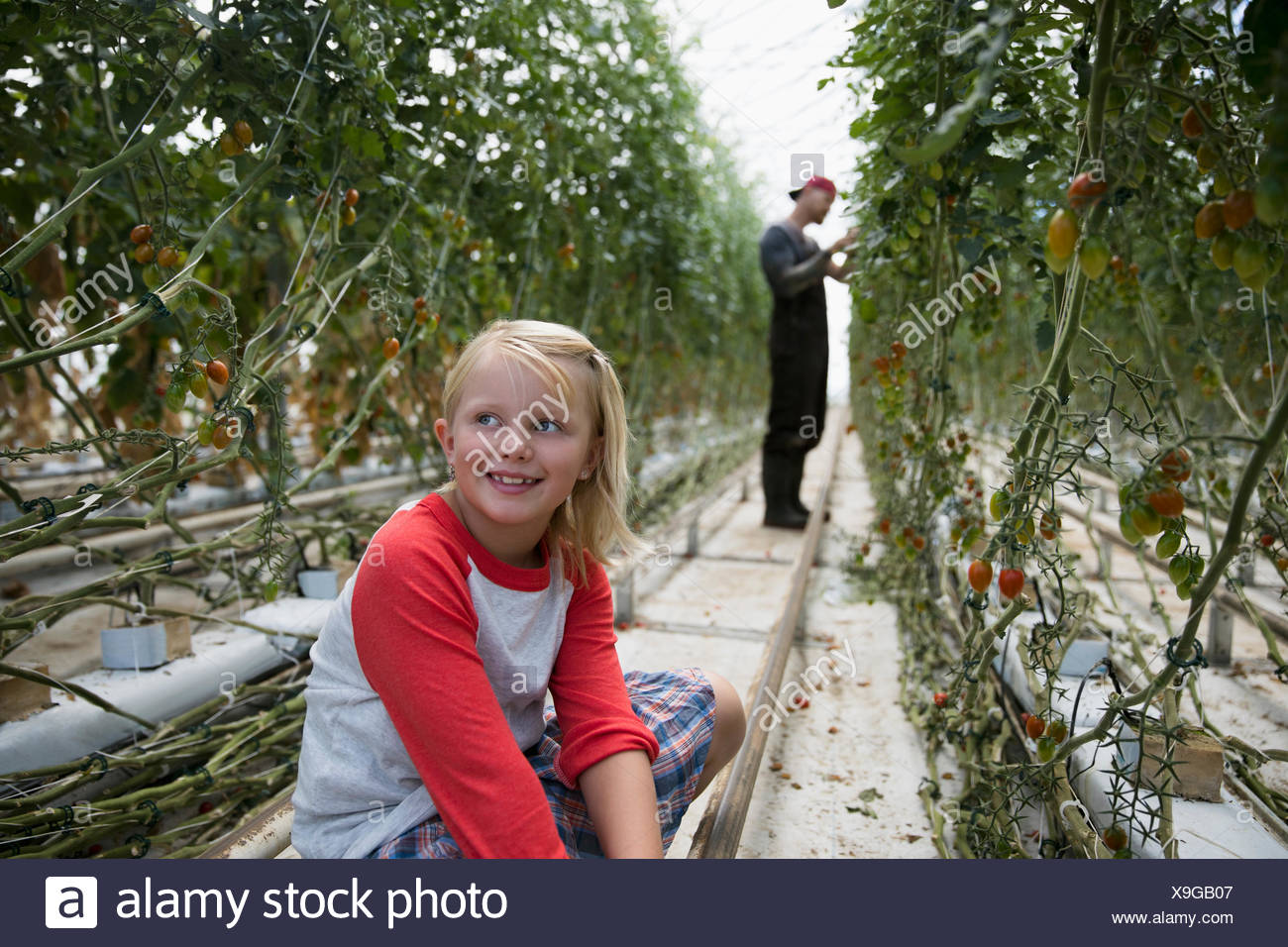 Smiling girl sitting in greenhouse among growing tomato plants - Stock Image