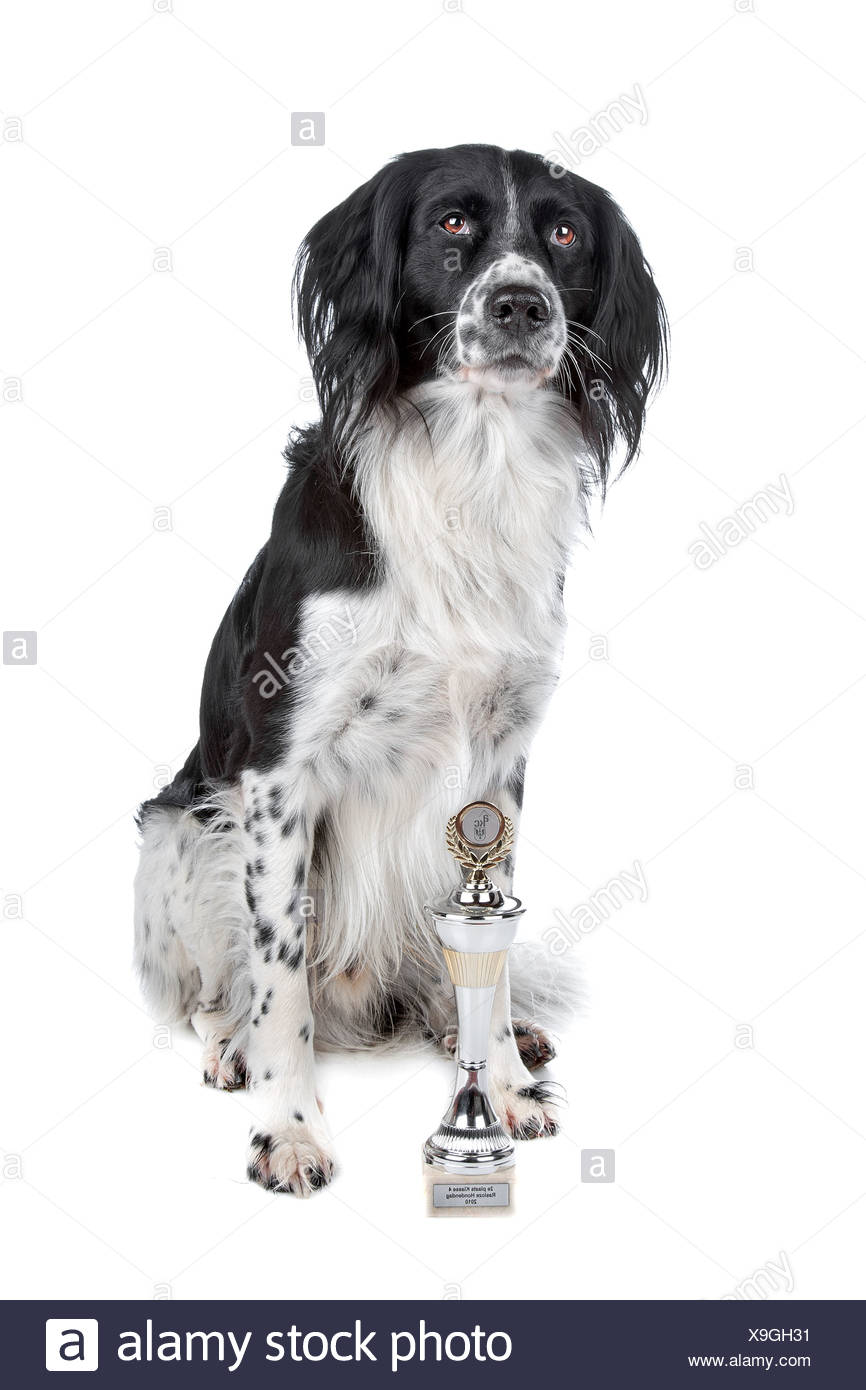 Mixed breed dog and his prize sitting, isolated on a white background - Stock Image