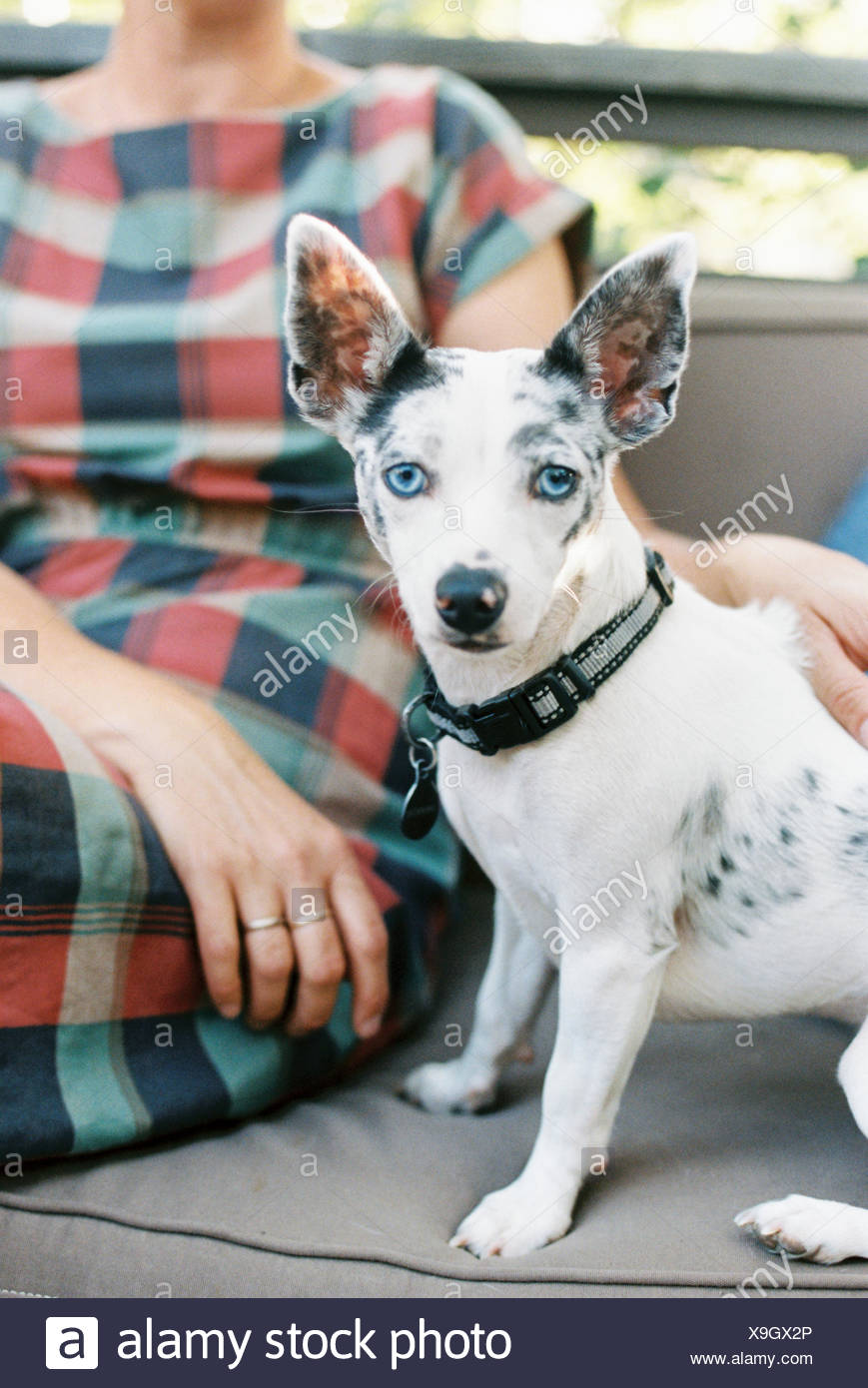Magnificent A Man And A Small Dog With Large Ears Seated On A Bench Frankydiablos Diy Chair Ideas Frankydiabloscom