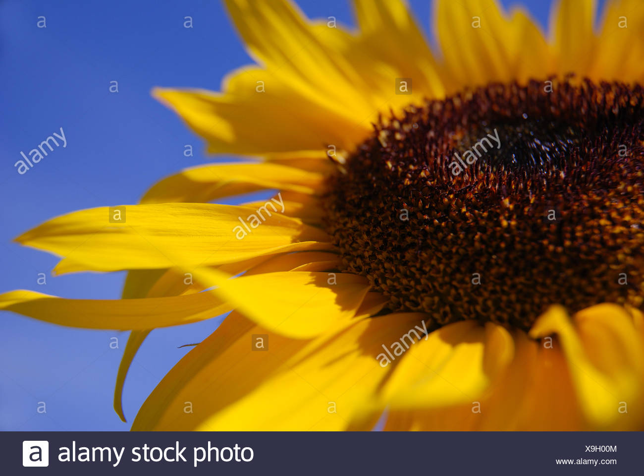 blue summer summerly - Stock Image