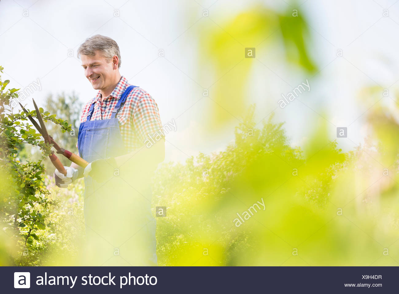Smiling gardener trimming tree branches at plant nursery - Stock Image