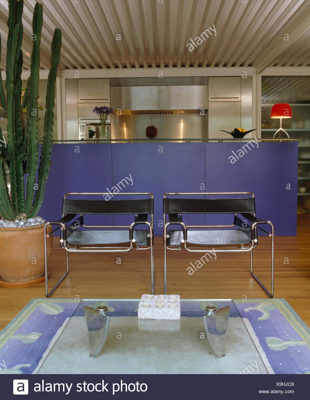 Two Marcel Breuer Wassily' chairs in modern open-plan living room and kitchen with tall cactus and blue counter - Stock Image