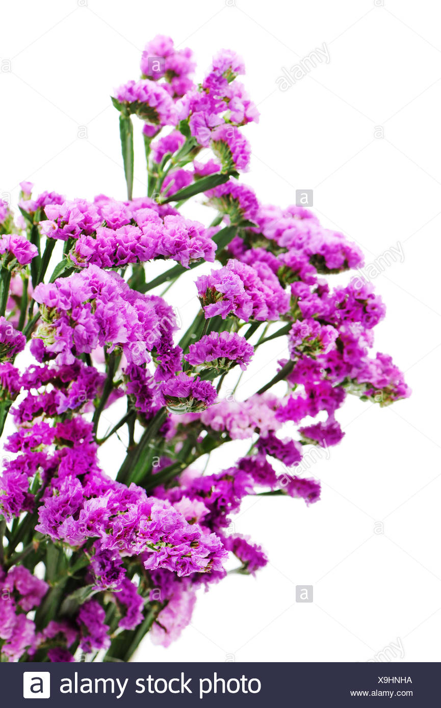 Bouquet from purple statice flowers arrangement centerpiece isolated on white background. - Stock Image