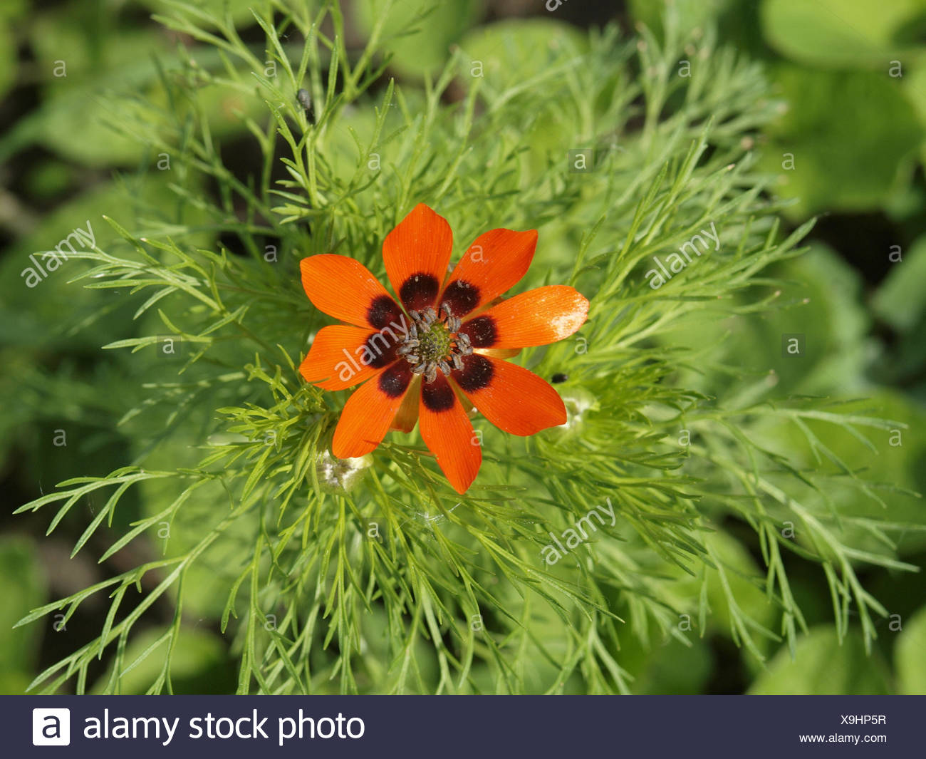 flower 1156673 - Stock Image