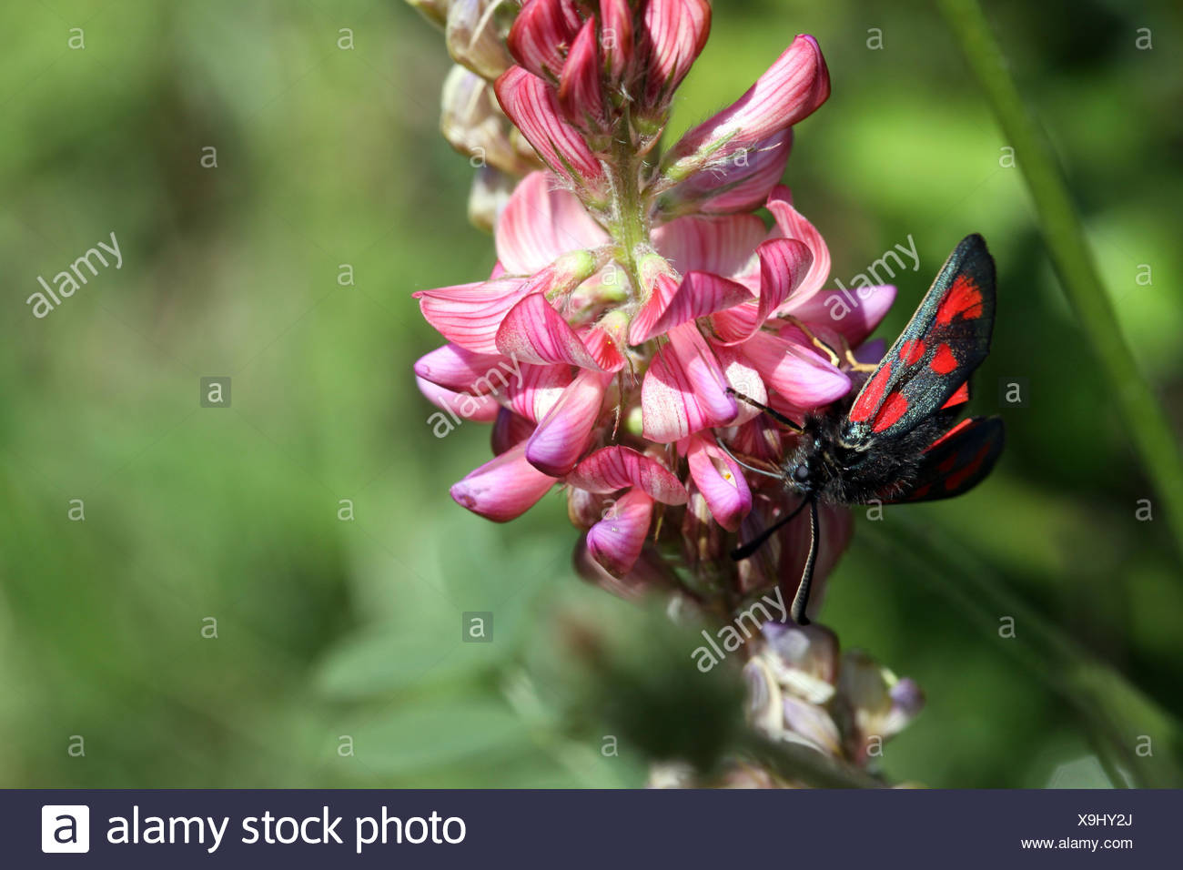 macro, close-up, macro admission, close up view, plant, flower, flowers, flora, Stock Photo