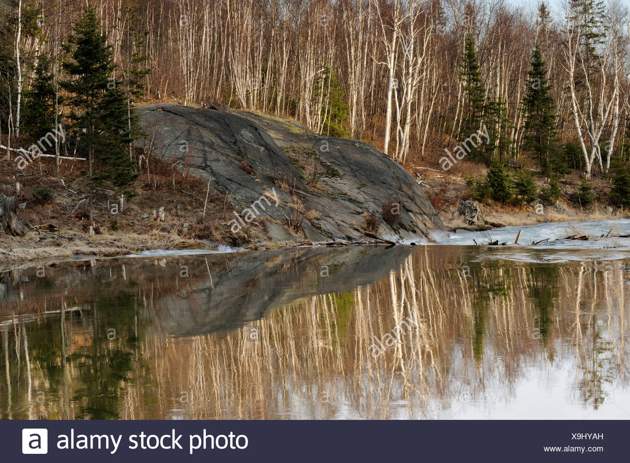 Reflections in Junction Creek above the beaver dam Lively, Ontario